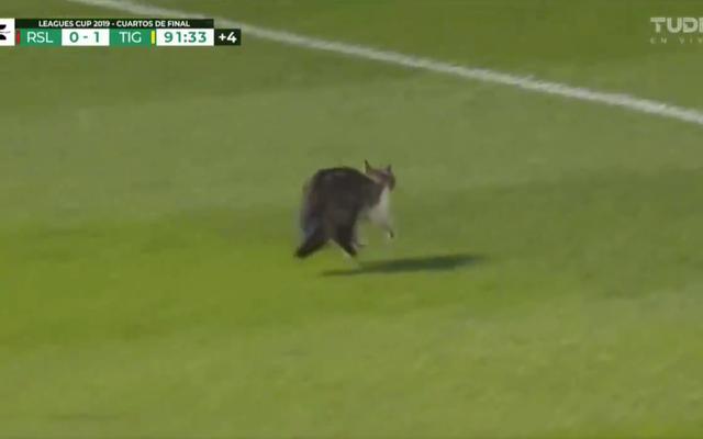 Thằng ngốc trên sân gần như bị giẫm đạp, chạy trốn không bị thương, có râu, là mèo