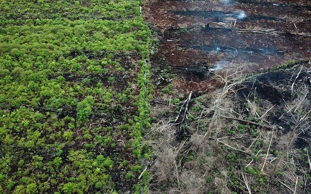 वनों की कटाई को रोकना, लोगों को पैसा देना