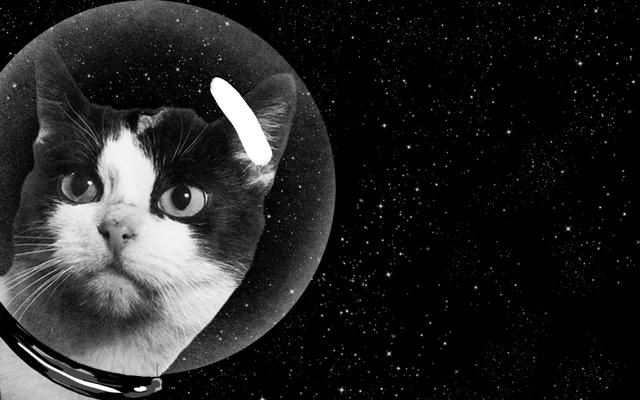 宇宙で最初の猫の秘密の歴史