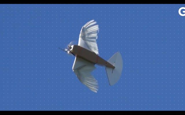 Científicos construyeron un robot con 40 plumas de paloma y vuela maravillosamente