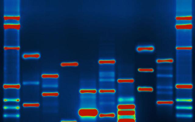 40,000人のネバダン人がDNA配列を決定している理由