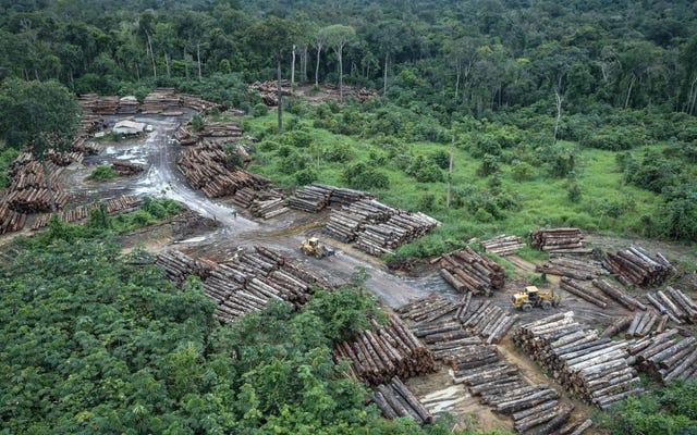 В первой половине июля Амазонка потеряла почти 400 квадратных миль леса