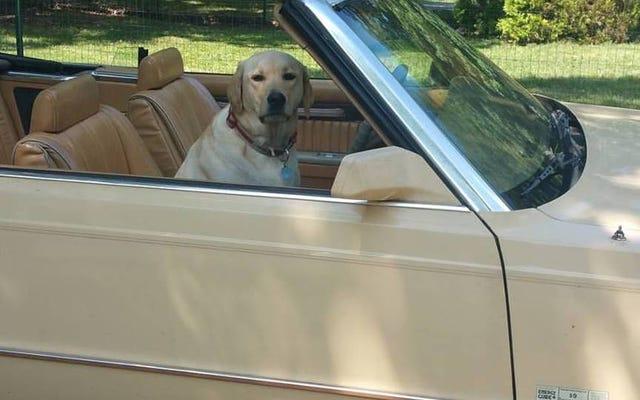 あなたの車の中であなたのペットを見せてください