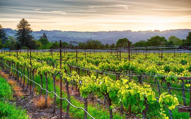 Impara la vinificazione vivendo a Sonoma e guadagnando $ 10.000 al mese