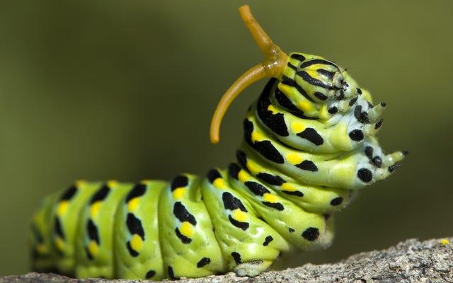 私は私の子供の毛虫を手に入れました:私の新しいうんちで満たされた生活からの挨拶