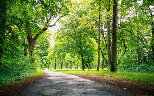 都市の木は田舎の木とは異なって成長します