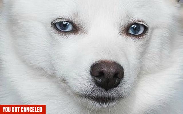 ええ、私はイヴァンカ・トランプの犬をキャンセルしています