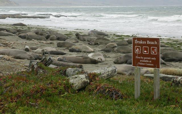 サタデーナイトソーシャル:ゾウアザラシはこのカリフォルニアビーチの正当な大君主です