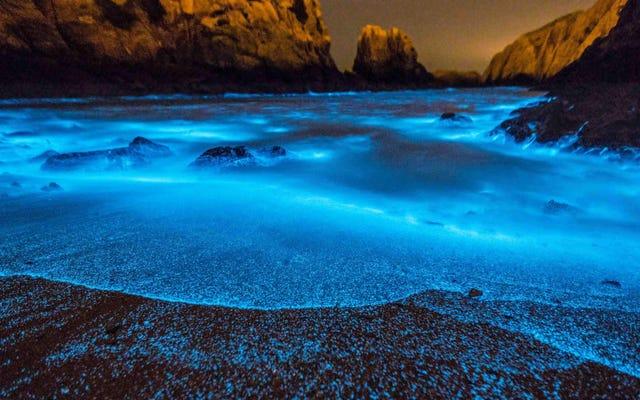 見事だが致命的な、中国の生物発光藻類ブルームはますます大きくなっている