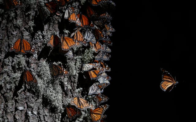 2番目の蝶の擁護者がメキシコで死んでいるのが発見されました