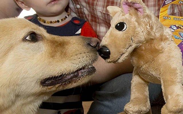 あなたが幸運なら、このサイトはあなたの救助犬を無料のぬいぐるみに変えます
