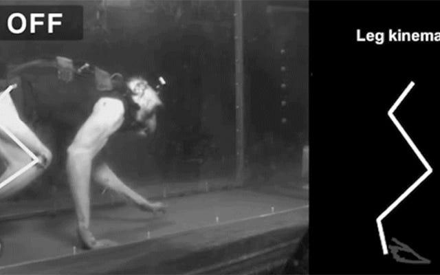 दो लकवाग्रस्त बंदर अपने मस्तिष्क में प्रत्यारोपित एक उपकरण के साथ गतिशीलता प्राप्त करते हैं
