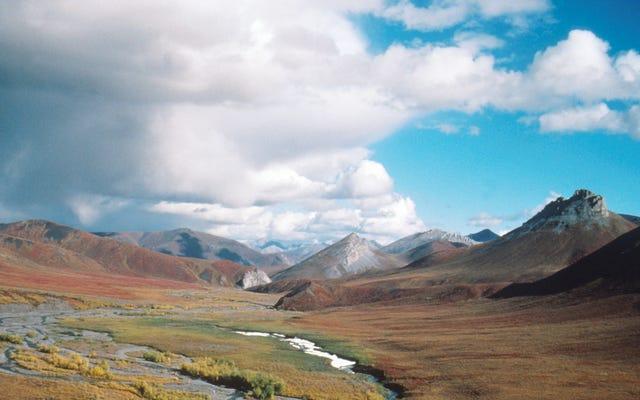 अलास्का रिपब्लिकन आर्कटिक ऑयल और गैस उद्योग को बचाने के लिए हताश प्रयास में व्हिनी लेटर लिखते हैं