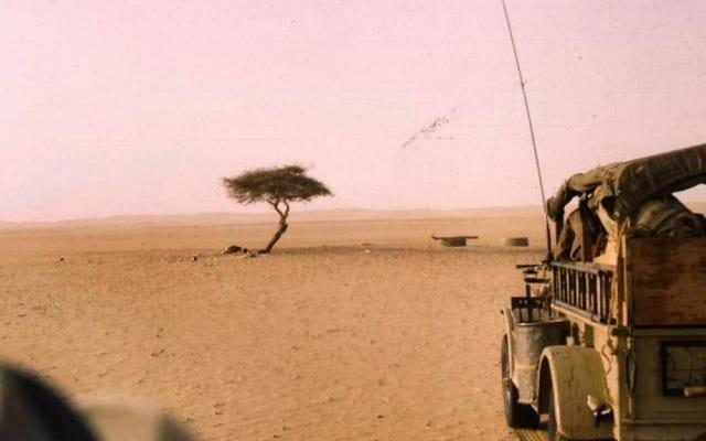 地球上で最も孤立した木はサハラ砂漠にあり、想像できる最もばかげた方法で死んだ