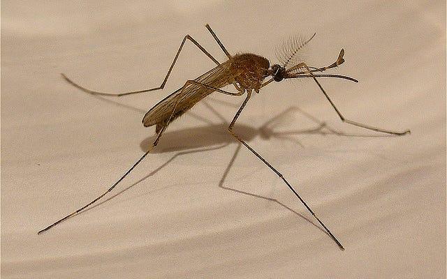 ड्रग-प्रतिरोधी मलेरिया भारत में फैलने के कगार पर है