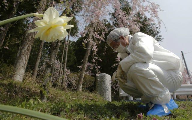 ชาวนาฟุกุชิมะใช้ดินที่ทำจากโพลีเอสเตอร์