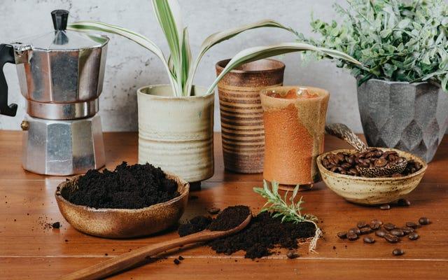 あなたはあなたの植物にコーヒーかすを置くべきですか?