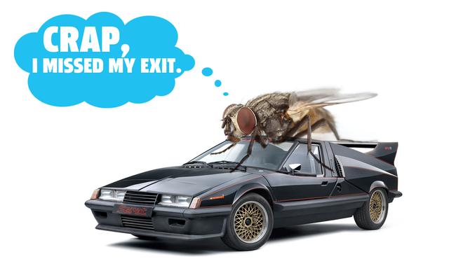 彼らが高速道路の速度であなたの車の窓から飛び出すとき、ハエは生き残りますか?