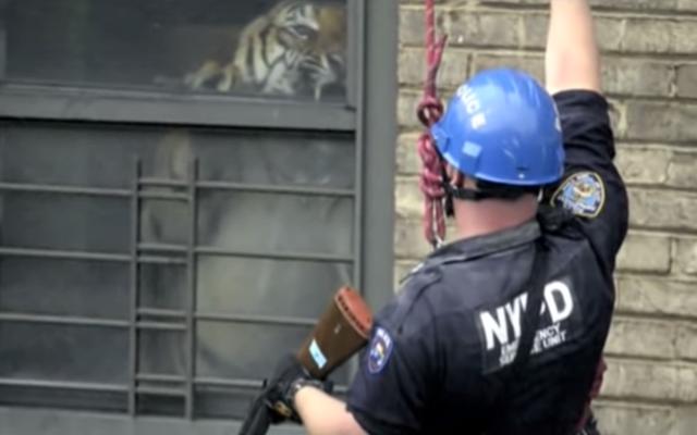 Ming, el tigre que vivió en un apartamento de Nueva York, ha muerto a los 19 años