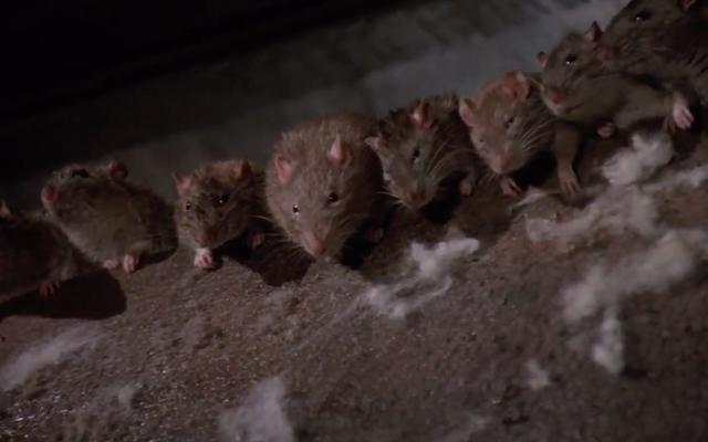 आपको लगा कि आपका दिन खराब था? इस आदमी को एक सिंकहोल के माध्यम से चूहों के गड्ढे में चूसा गया था