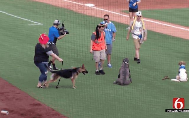 L'événement Bark In The Park va de côté lorsque de très bons chiens repèrent OH MON DIEU SONT CES BASEBALLS!