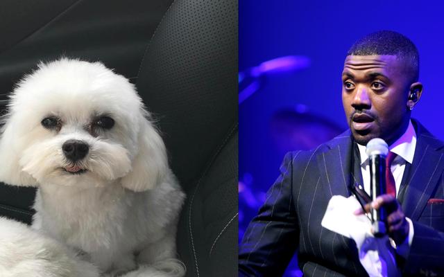 Собака Буготти Рэя Джея поймали, верните его за вознаграждение в размере 20 000 долларов