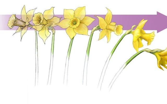 花が橋が崩壊する理由を理解するのにどのように役立つか
