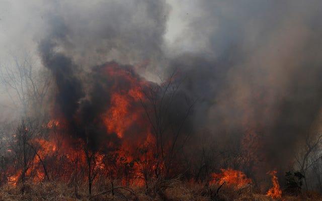 В результате лесных пожаров в Боливии погибло более 2 миллионов животных