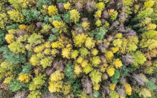 1兆本の木の危険な誘惑