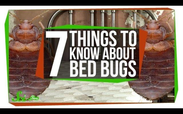 Tutto quello che devi sapere sulle cimici dei letti, in un video