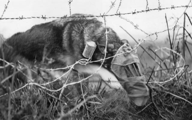 Bagaimana seekor anjing bertopeng gas mengubah nasib tentara dalam Perang Dunia I
