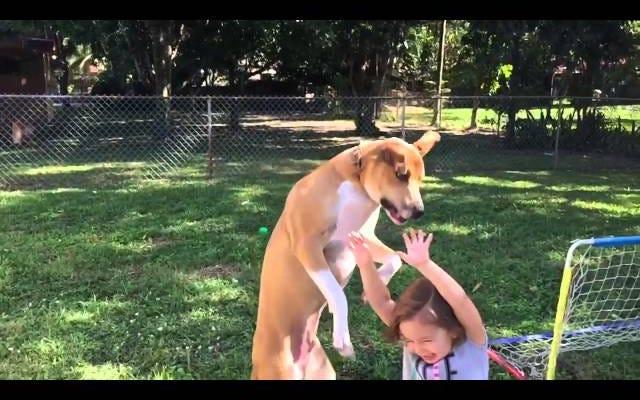 """La cara del perro dice """"He cometido un gran error"""" justo antes de caer sobre el niño"""