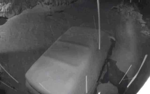 Ver a este oso abrir casualmente las puertas de este auto me está volviendo loco