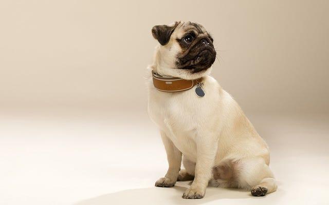 この割引スマートカラーであなたの犬の居場所と活動レベルを追跡する