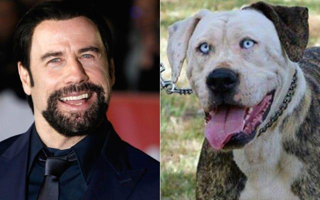 ちょっと、簡単な質問:なぜこの犬はジョントラボルタのように見えるのですか?