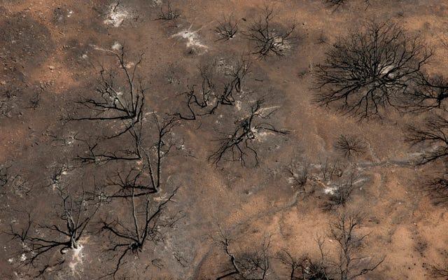 Вот видео вечеринки по выявлению гендерных различий, которая вызвала массовый лесной пожар в Аризоне