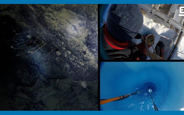 科学者たちは南極の棚氷の下で半マイルの予期しない生命を発見しました