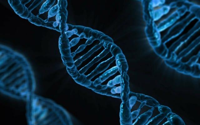 科学者はCRISPRを使用してマウスのハンチントン病を逆転させました
