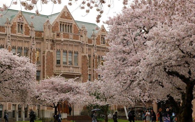 ワシントン大学はバレーボールスターの性的暴行の申し立てを「非常に信頼できる」と認めたが、告発された公式は結果なしに去らせた