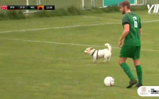 Câu lạc bộ bóng đá cấp thấp của Anh (không, không phải Newcastle lần này) đến với những con chó