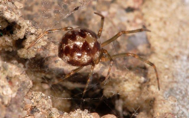 都市に住むクモは光を恐れないように進化しています