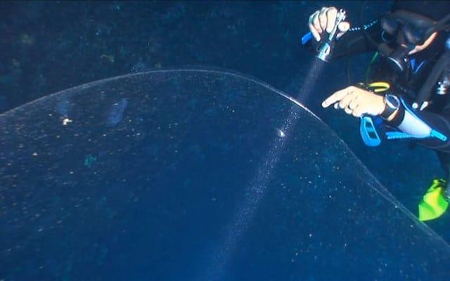 ダイバーがトルコ沖で巨大なイカの卵の塊を発見