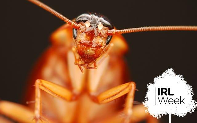 मकड़ियों, जहर, और उबलते पानी: कॉकरोच को मारने के सर्वोत्तम (और सबसे बुरे) तरीके