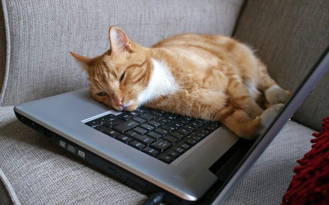 Niente riassume la vita lavorativa meglio dei meme animali