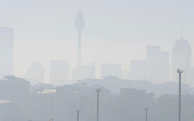 Sydney zakrztusiła się dymem jak dzikie pożary w Nowej Południowej Walii