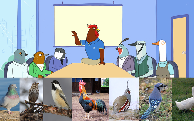 Seekor Burung Pecinta Mengamati Tuca & Bertie, Lalu Mencoba Mengidentifikasi Semua Burung