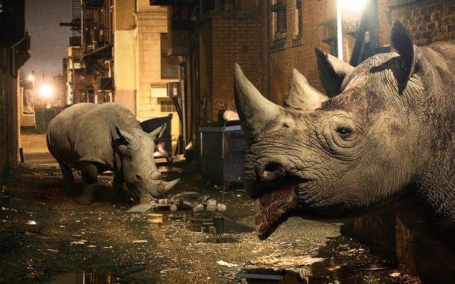 Un programme de conservation aide les rhinocéros en difficulté à s'adapter à l'écosystème moderne en les recyclant en tant que charognards urbains