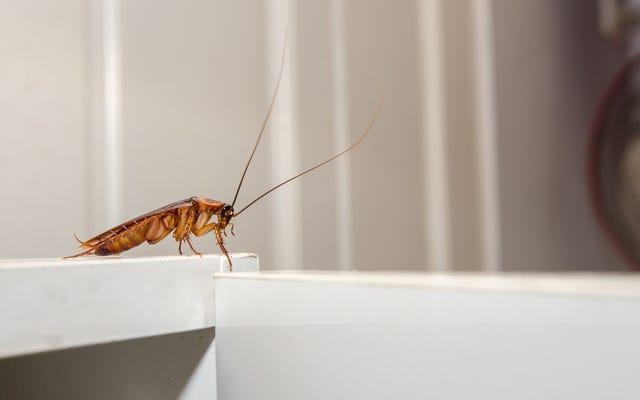 そのゴキブリは男を必要としない