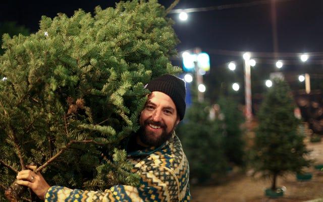 Pastikan Anda Cukup Menyirami Pohon Natal Anda