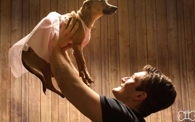 バレンタインデーなので、犬と一緒にロマンチックな映画を再現したほうがいいかもしれません